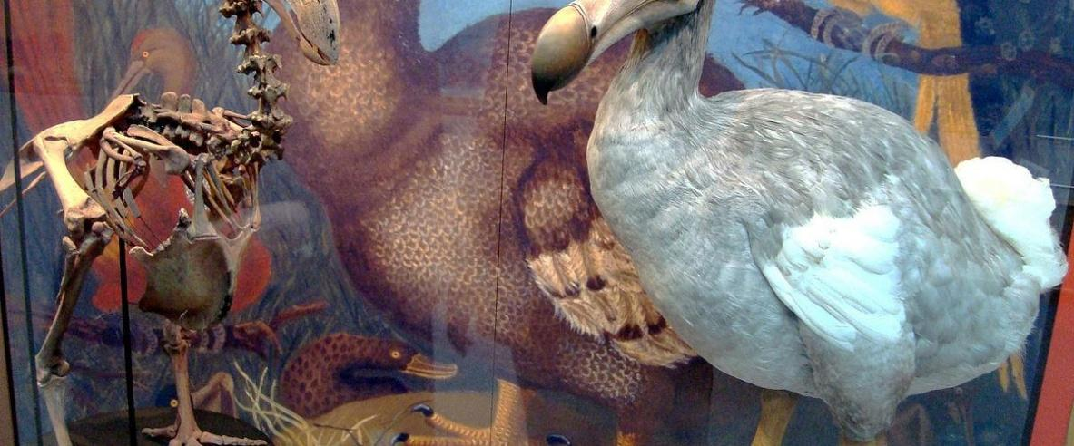 8 طيور انقرضت في زمن قياسي