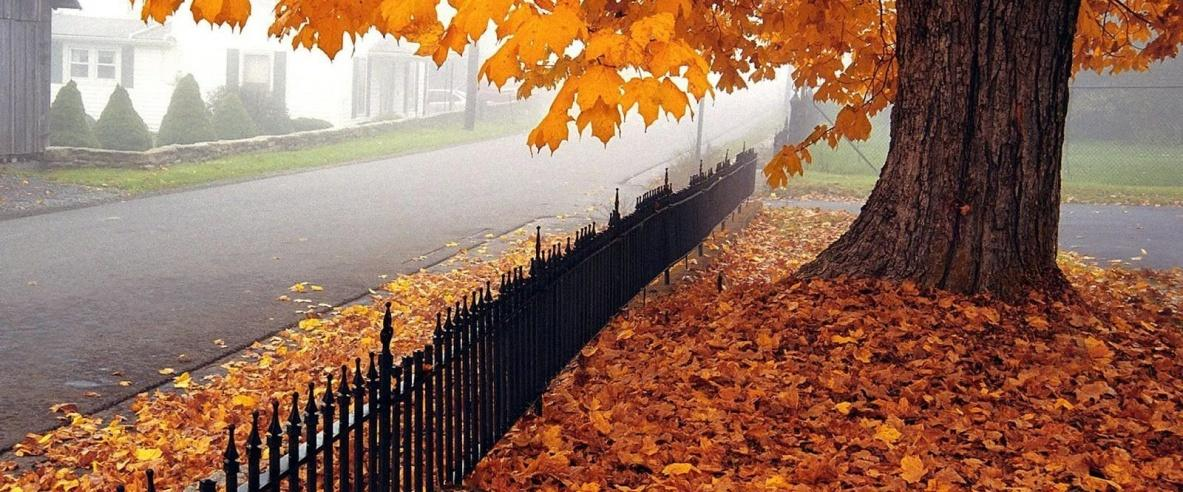 فصل الخريف يبدأ الاثنين القادم