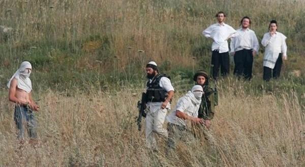 مستوطنون يسرقون الزيتون من أراضي قريوت جنوب نابلس