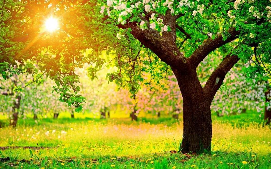 احذروا شمس الربيع