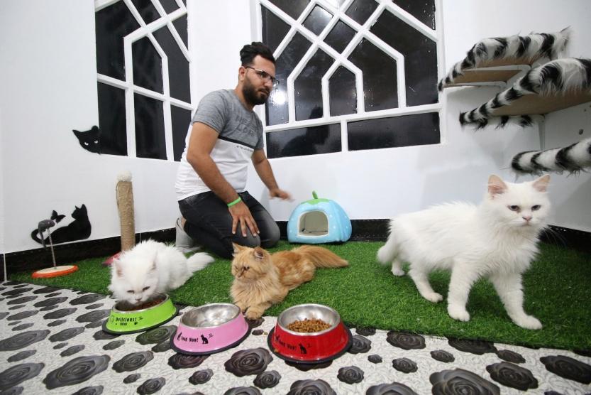 مساع لإيجاد مأوى لـ110 قطط طُرِدت من شقة في إسبانيا